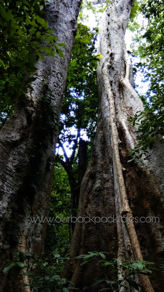 Athirapally waterfalls 9 our backpack tales