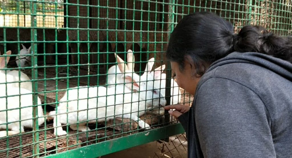 Rabbits at the zoological park yercaud by ourbackpacktales