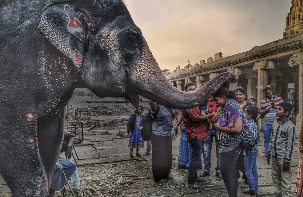 lekshmi-elephant-in-virupaksha-temple-hampi