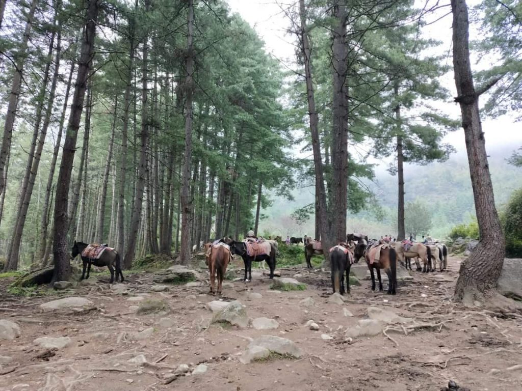 Mules on base camp of Tigers nest monastery in Bhutan