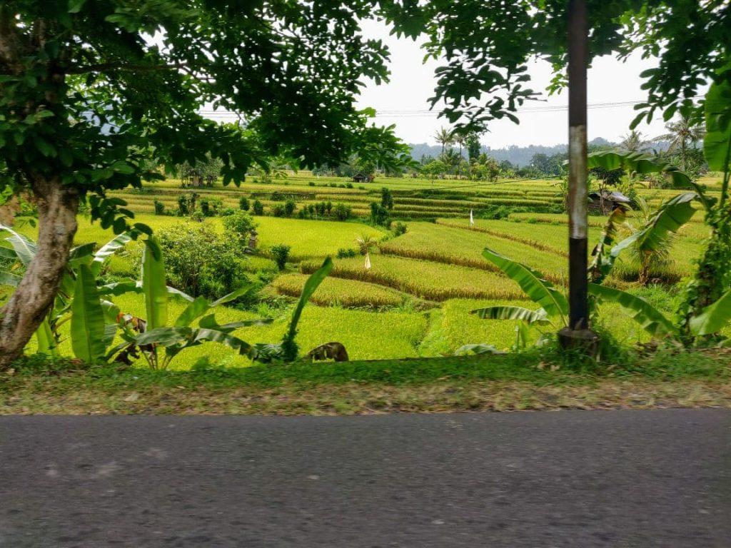 Sidemen rice terrace in bali