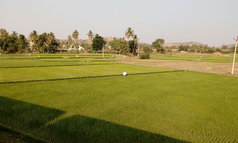 Chittoor agriculture fields
