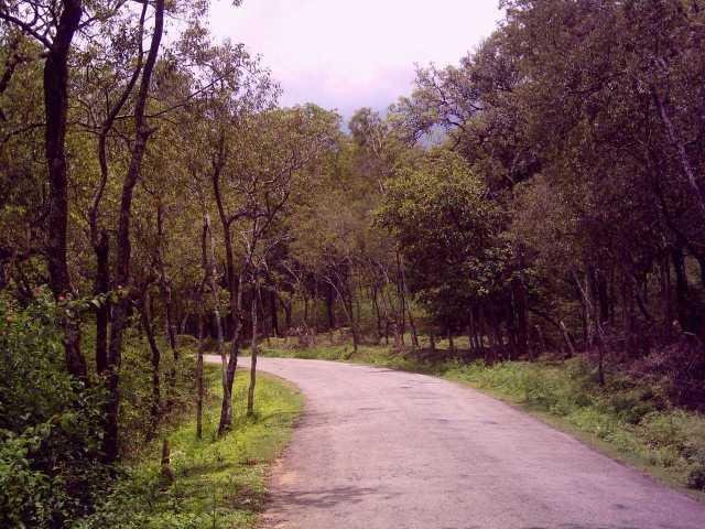 Marayoor sandalwood forest in Munnar