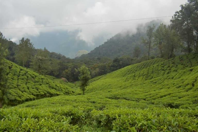 Malakkapara Tea Gardens