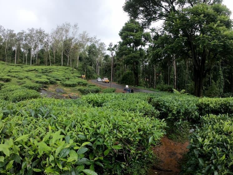 Coorg plantations