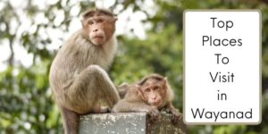 Top places to visit in wayanad cover photo